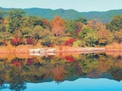 北京市属公园推出20处彩叶观赏点